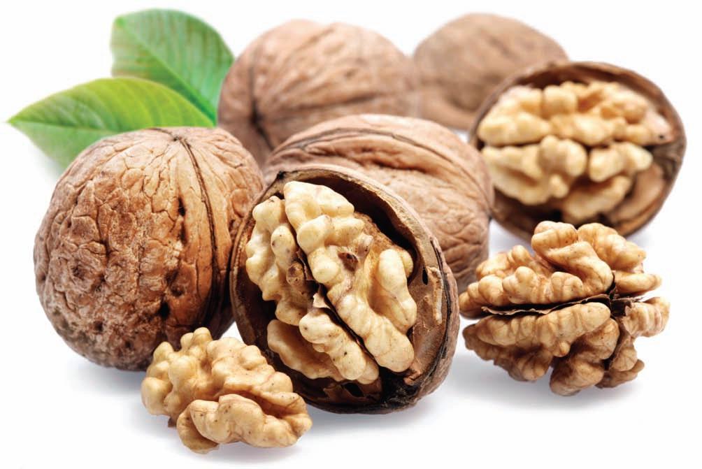 1352566599 12 Как растут настоящие орехи?